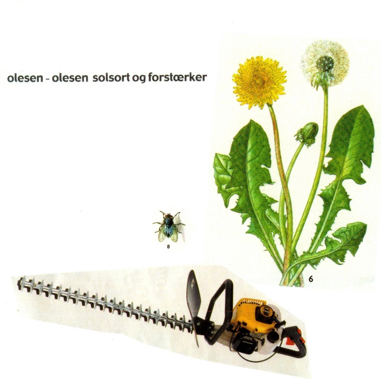 Olesen Olesen – 'Solsort & Forstærker' (Single)
